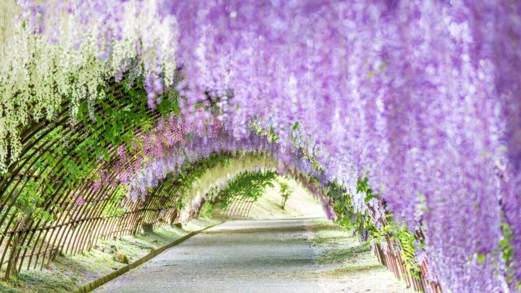 fukuoka flower tunnel