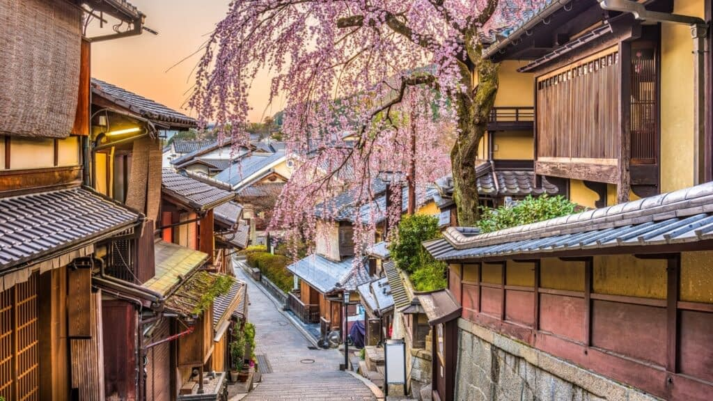 street in kyoto with cherry blossom trees