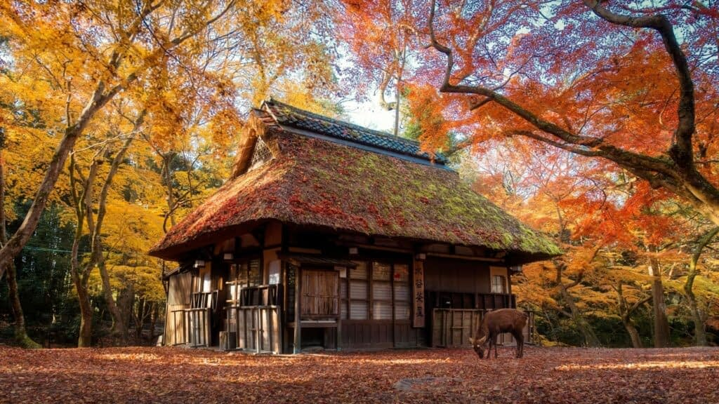 House and a deer in nara park